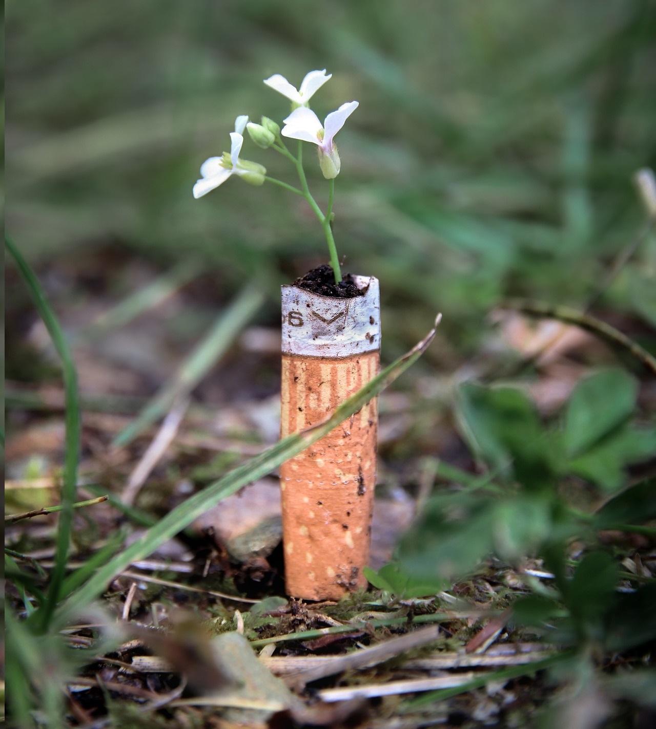 E-cigarette et écologie
